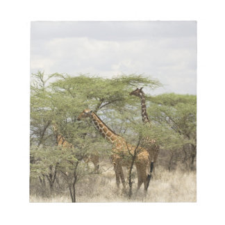Kenya, Samburu National Reserve. Rothschild Notepad