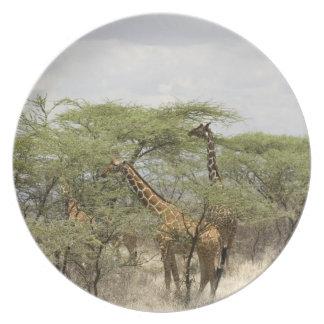 Kenya, Samburu National Reserve. Rothschild Plate
