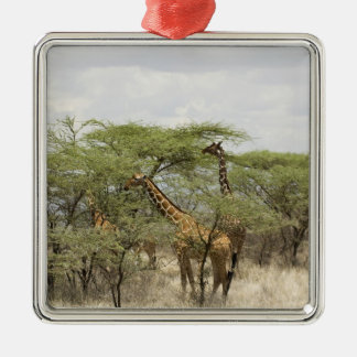 Kenya, Samburu National Reserve. Rothschild Silver-Colored Square Decoration