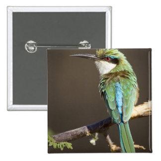 Kenya. Somali bee-eater bird on limb. Credit as: 15 Cm Square Badge