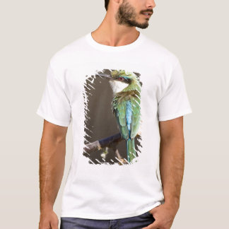 Kenya. Somali bee-eater bird on limb. Credit as: T-Shirt