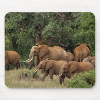 Kenya: Tsavo East National Park, herd African Mouse Mat