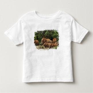 Kenya: Tsavo East National Park, herd African Toddler T-Shirt