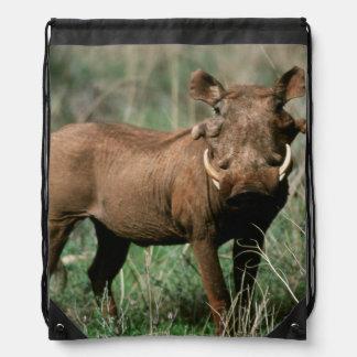 Kenya, Warthog looking at camera Drawstring Bag