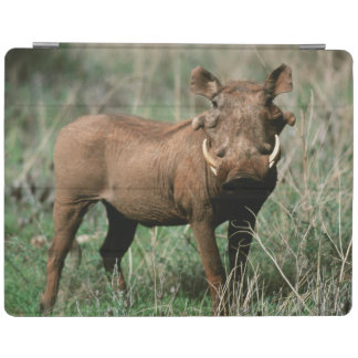 Kenya, Warthog looking at camera iPad Cover