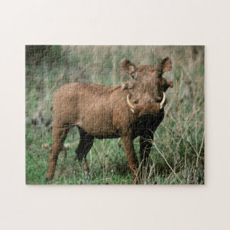 Kenya, Warthog looking at camera Jigsaw Puzzle