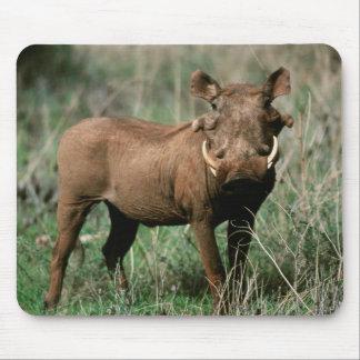 Kenya, Warthog looking at camera Mouse Mat