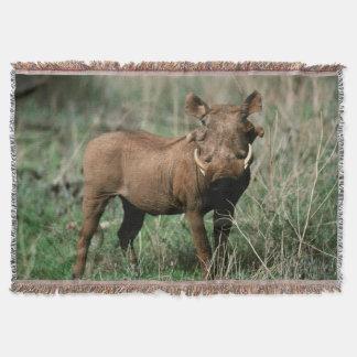Kenya, Warthog looking at camera Throw Blanket
