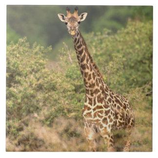 Kenyan giraffe tile