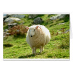Kerry Sheep on Ring of Kerry Greeting Card