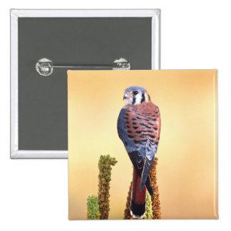 Kestrel, Falco sparverius, Native to US & Canada 15 Cm Square Badge