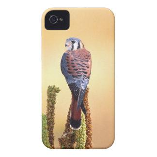 Kestrel, Falco sparverius, Native to US & Canada iPhone 4 Case-Mate Case