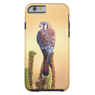 Kestrel, Falco sparverius, Native to US & Canada Tough iPhone 6 Case