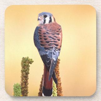 Kestrel, Falco sparverius, Native to US & Canada Coasters