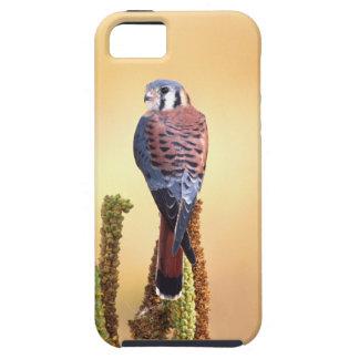 Kestrel, Falco sparverius, Native to US & Canada iPhone 5 Cases
