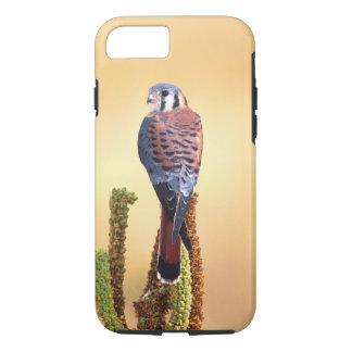 Kestrel, Falco sparverius, Native to US & Canada iPhone 8/7 Case