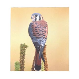 Kestrel, Falco sparverius, Native to US & Canada Notepad