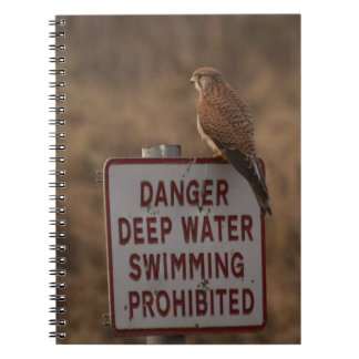 Kestrel Notebook