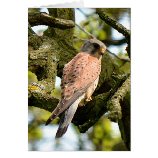Kestrel on vigil blank greeting card