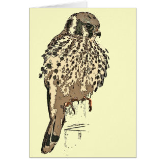 Kestrel Raptor Bird Card
