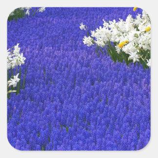 Keukenhof, Flowers  from Holland Square Sticker