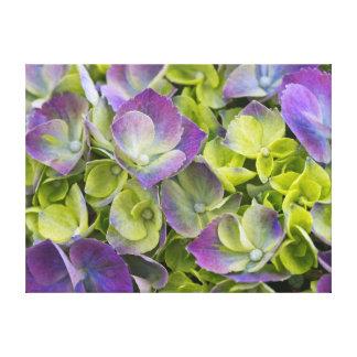 Keukenhof Garden Hydrangea Stretched Canvas Prints