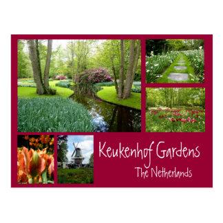 Keukenhof Gardens Collage Postcard