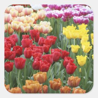 Keukenhof Gardens, Holland, specializes in 2 Square Sticker