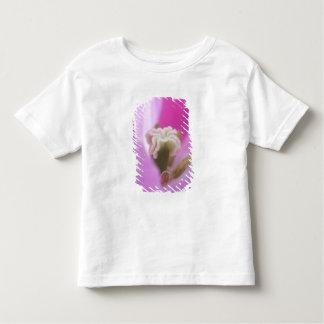 Keukenhof Gardens, Holland, specializes in 3 Toddler T-Shirt