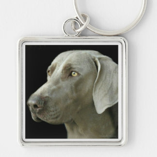 Key Chain - Head Study Weimaraner