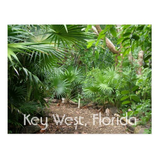 Key West, Florida Postcard