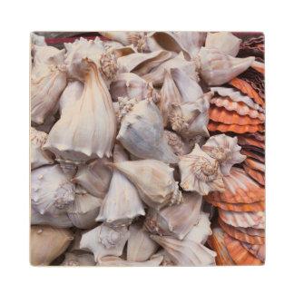 Key West, seashells Wood Coaster
