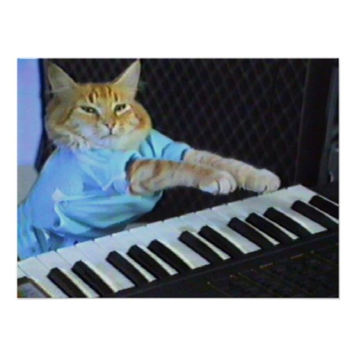Keyboard Cat Wall Poster! Poster
