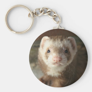 Keychain Ferret close-up
