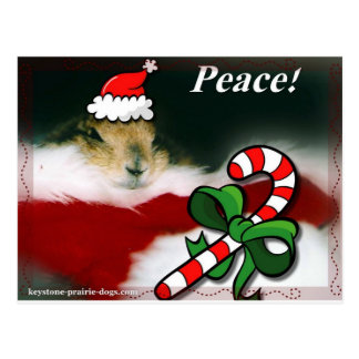Keystone Prairie Dog Christmas Postcard