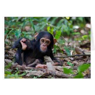 Kibale Chimpanzee Greeting Card - Quiver