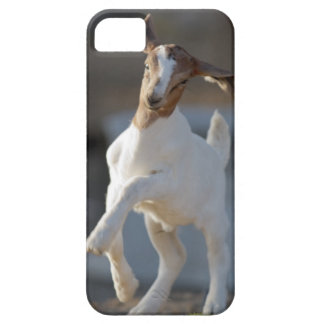 Kid Goat Playing iPhone 5 Cover