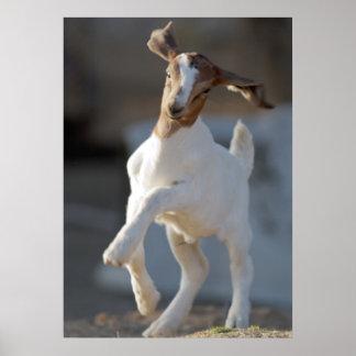 Kid Goat Playing Poster