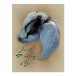Kid Goat Postcard- customize Postcard
