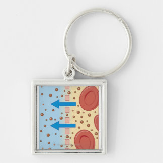Kidney Dialysis Key Ring