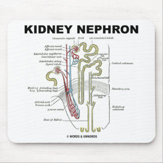 Kidney Nephron Mouse Pads