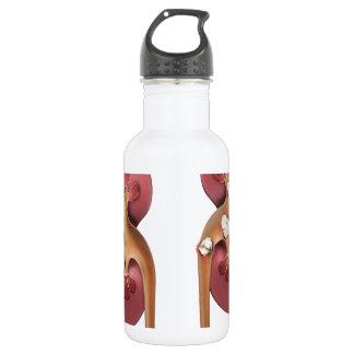 kidneys 532 ml water bottle