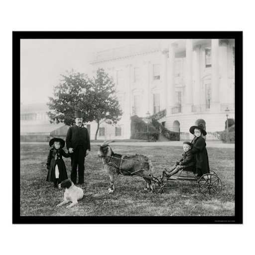 Kids on a Goat Cart at the White House 1890 Poster