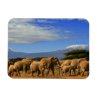 Kilimanjaro And Elephants Magnet