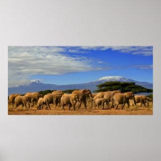 Kilimanjaro And Elephants Poster