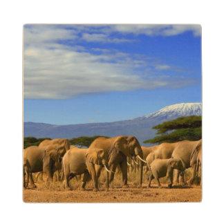 Kilimanjaro And Elephants Wood Coaster
