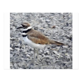 Killdeer Bird Postcard