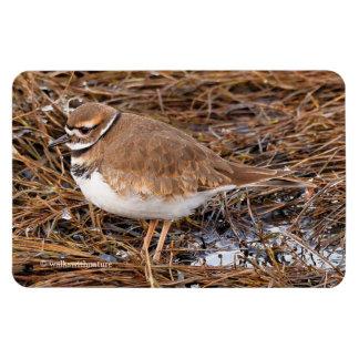 Killdeer in the Freezing Mudflats Rectangular Photo Magnet