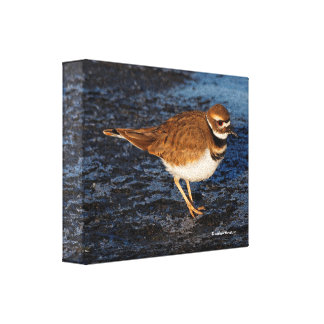 Killdeer on the Icy Mudflats Canvas Print