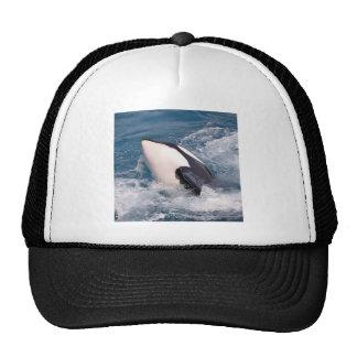 Killer whale cap